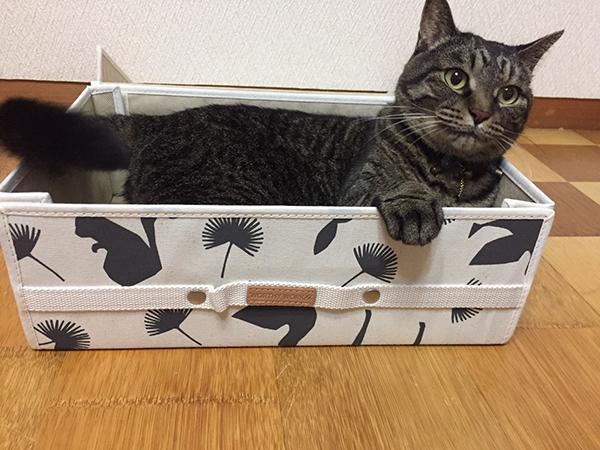 メルマガ プレゼント 収納ボックス ねこ 猫 ネコ